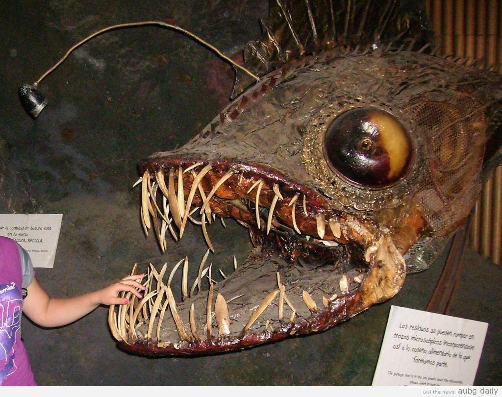 A dragonfish